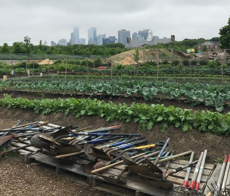 GrowNYC urban garden